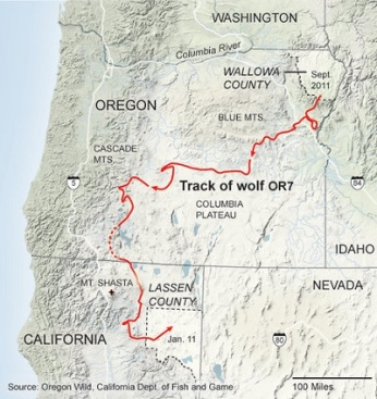 track-gray-wolf-map